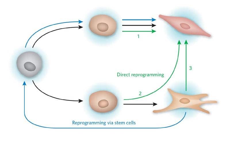 Learning more about the reprogramming process could even allow us to skip the stem cell process and instruct a cell to become whatever variety we require Credit: Ronald E Ellis, Nature Chemical Biology