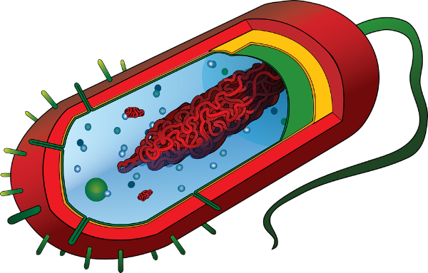 pathogen-296502_960_720[1].png