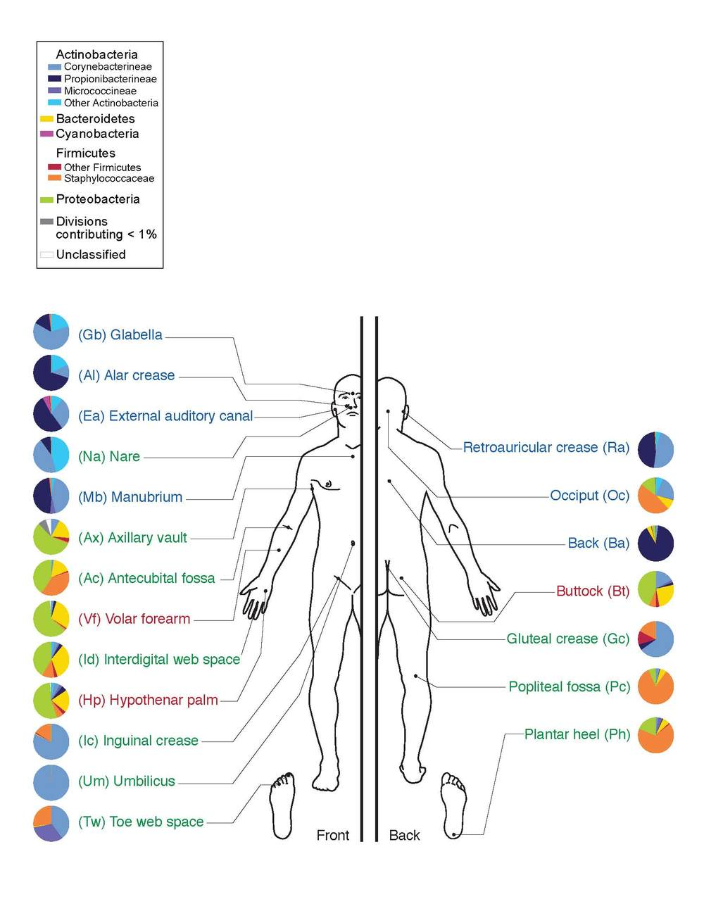 Humans have a multitude of different microbes living on and in us