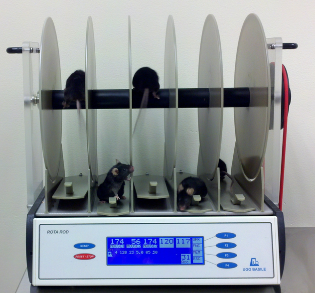 A Rotarod test machine. The rod rotates and the time that mice can stay running on it is measured. This is a measure of the mice's balance, coordination, physical condition, and motor-planning