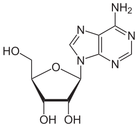 The chemical structure of adenosine