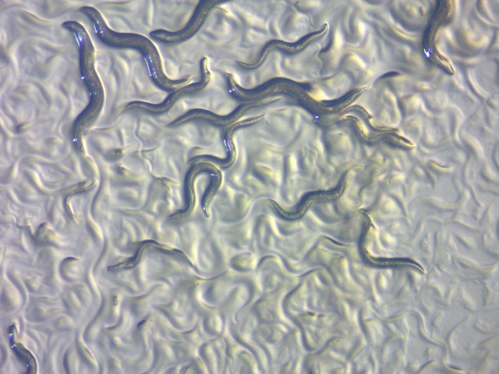 Credit: ZEISS Microscopy