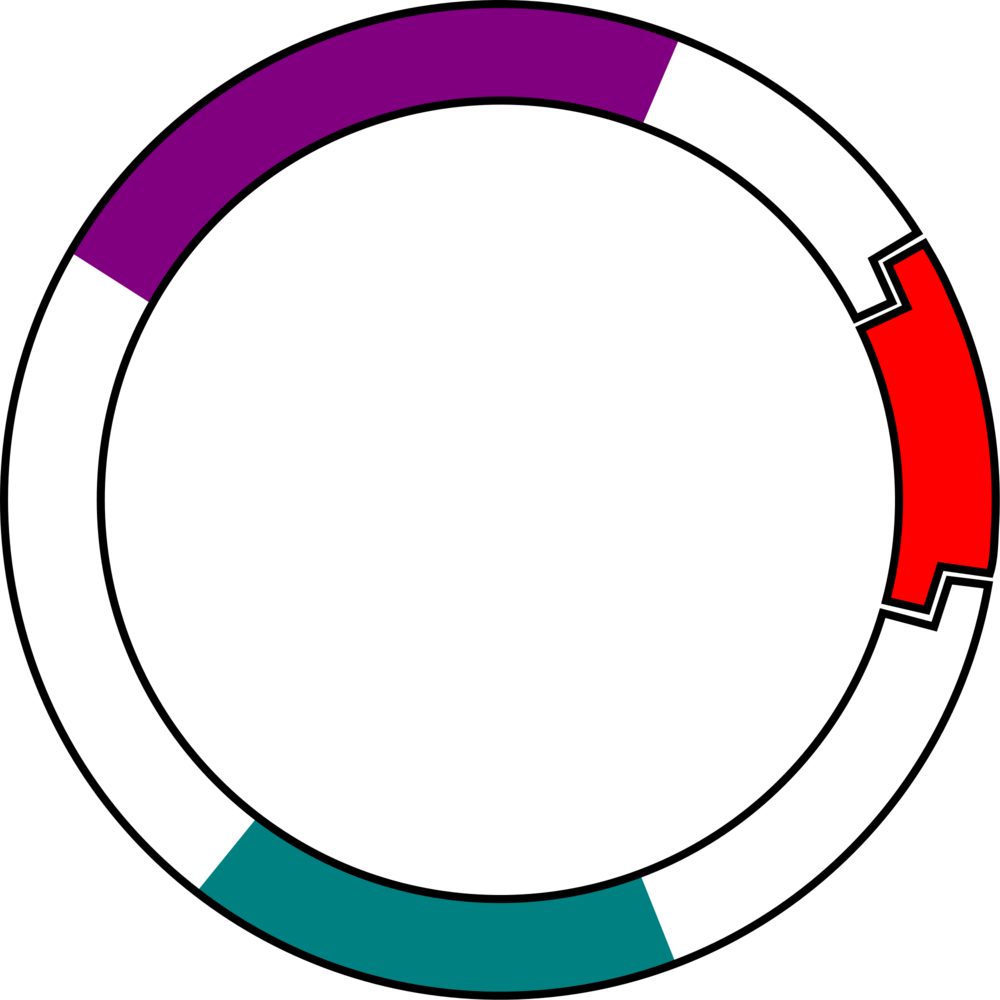 The gene you want to deliver is included in a circular plasmid carried within your viral delivery system. This plasmid is a circular DNA strand, with a number of important components.