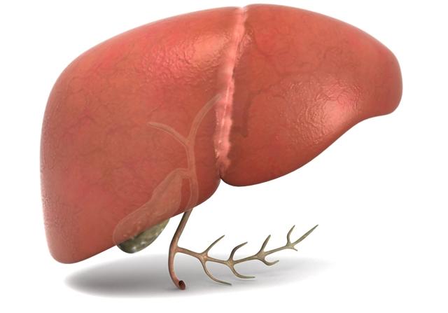 liver-gallbladder-front[1].jpg