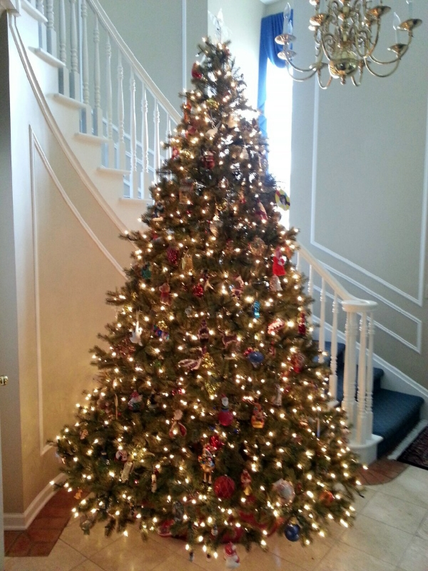 The tree at Casa Lombardi