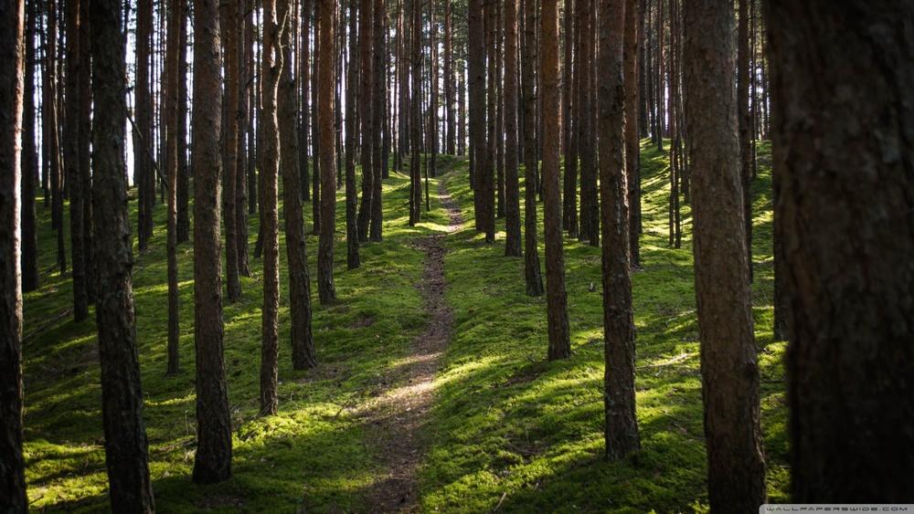 the_forest_-wallpaper-1280x720.jpg