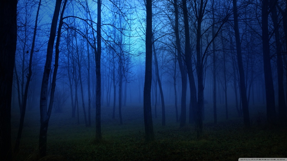 night_in_the_forest-wallpaper-1280x720.jpg