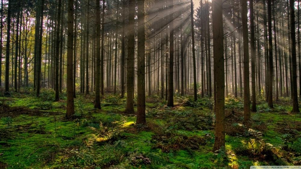 forest_30-wallpaper-1280x720.jpg
