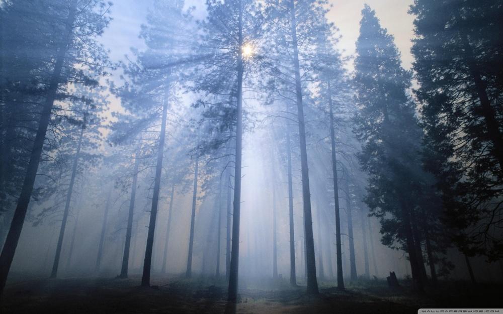 stanislaus_national_forest_california-wallpaper-1280x800.jpg