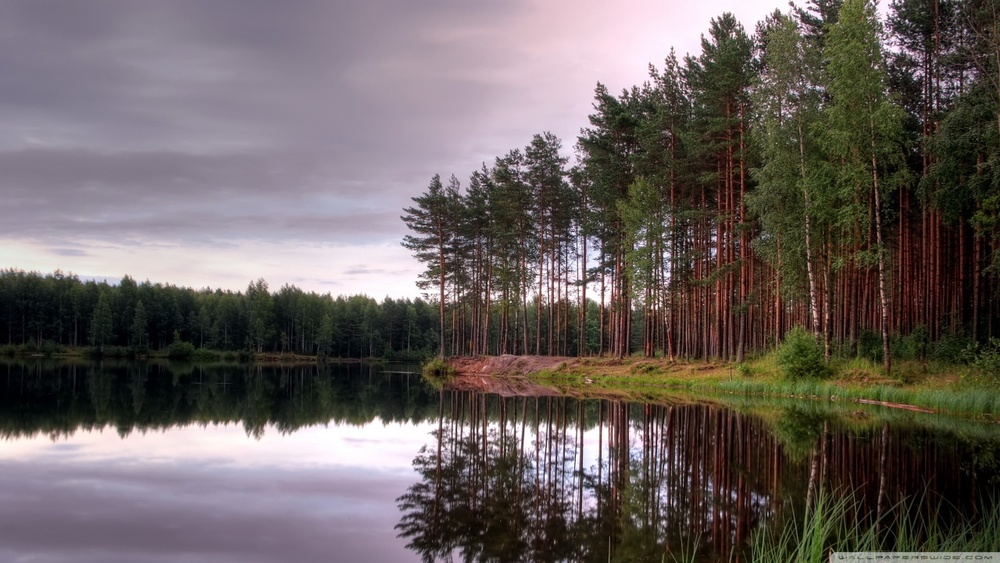 lake_and_forest-wallpaper-1280x720.jpg