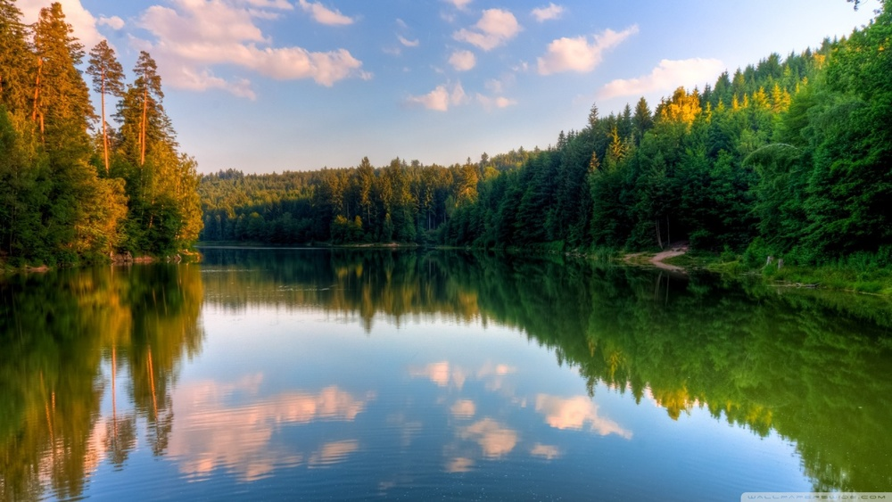 river_forest-wallpaper-1280x720.jpg