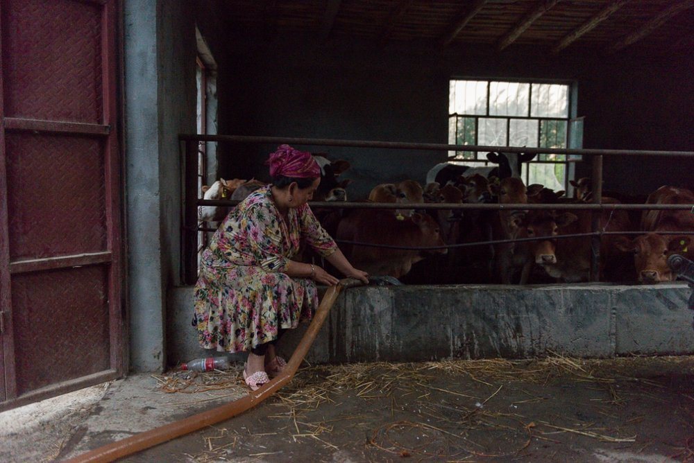Still wearing the dress she wore for the wedding that had happened earlier in the day, a woman fills the cattle trough of the family farm.