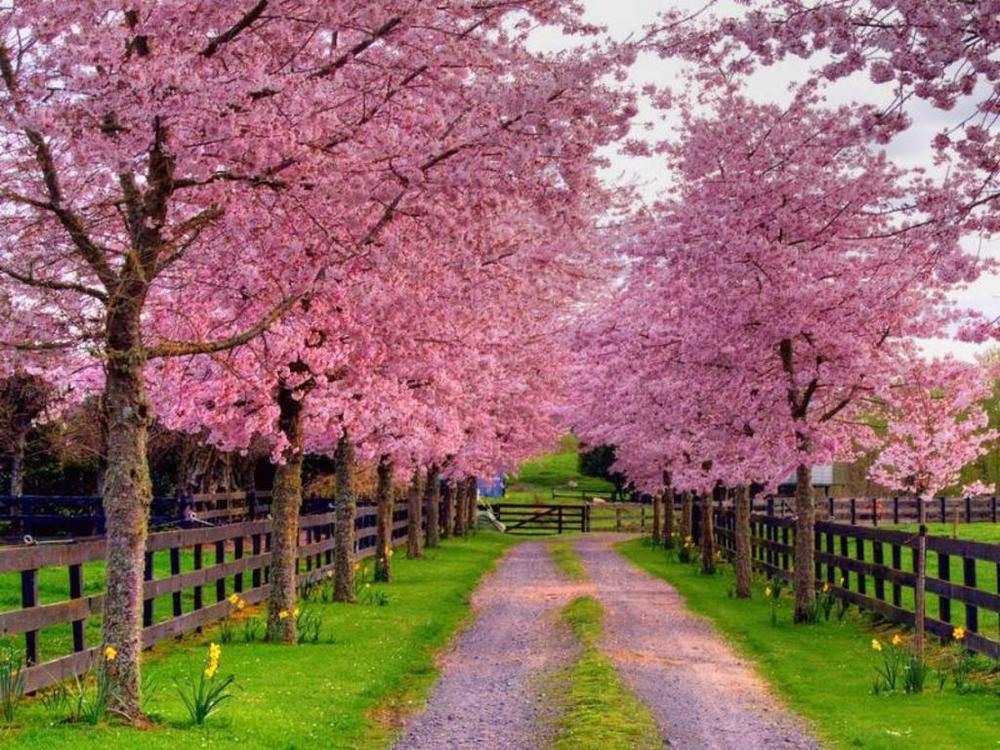 spring driveway jpg Spring