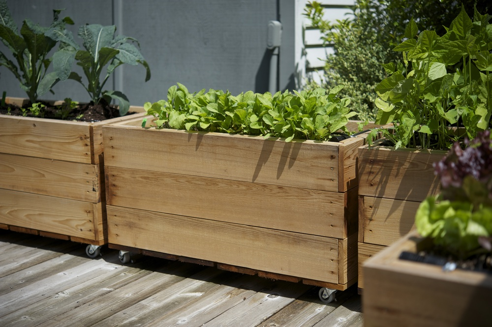 2'x3' small cedar beds - photo by Seattle Urban Farm Company