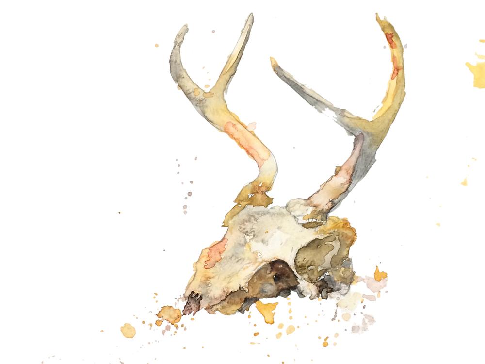 deer skull watercolor.jpg