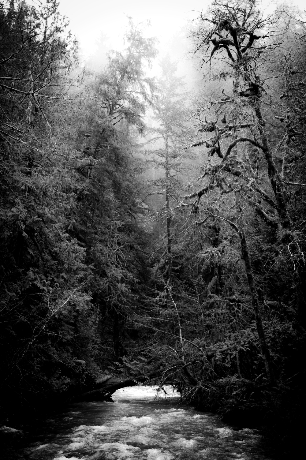 Misty-Trees-B&W.png