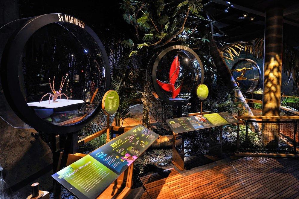Chocó Rain forest diorama_DF.jpg