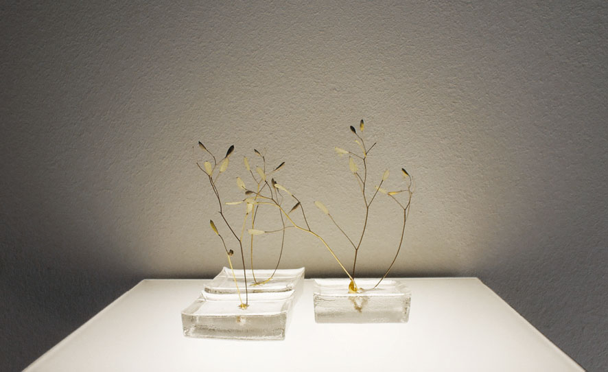 moosgras 2013 7 cm × 7 cm × 7 cm Sporenkapseln von Waldmoos, Gießharz | moss seeds, resin verkauft | sold