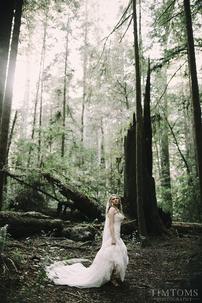Bride in the Redwood Forest Wedding