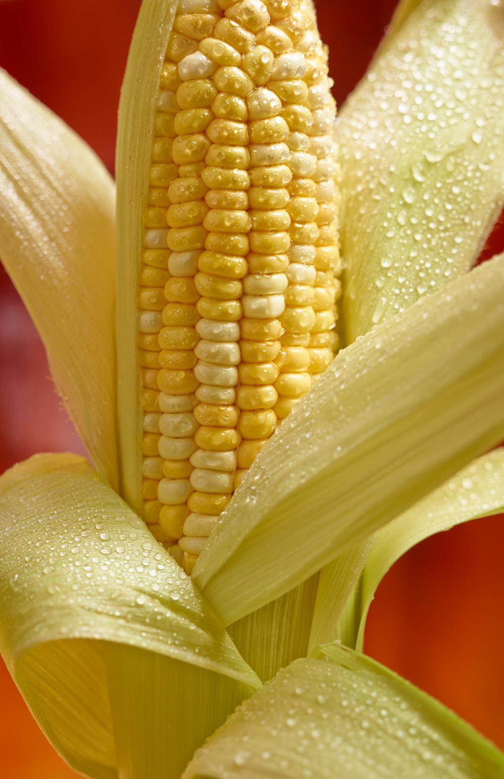 CornOnCob.jpg