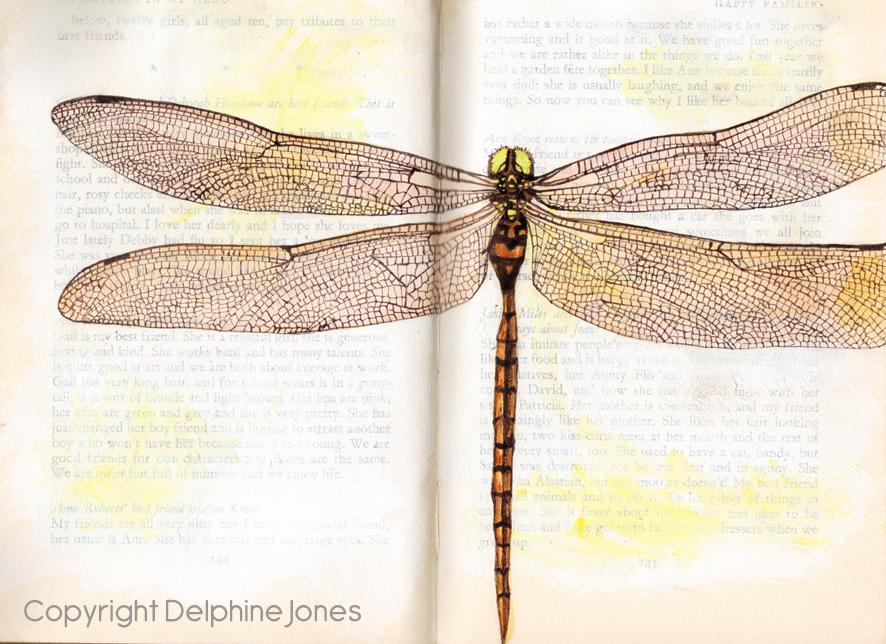 dragonfly web.jpg