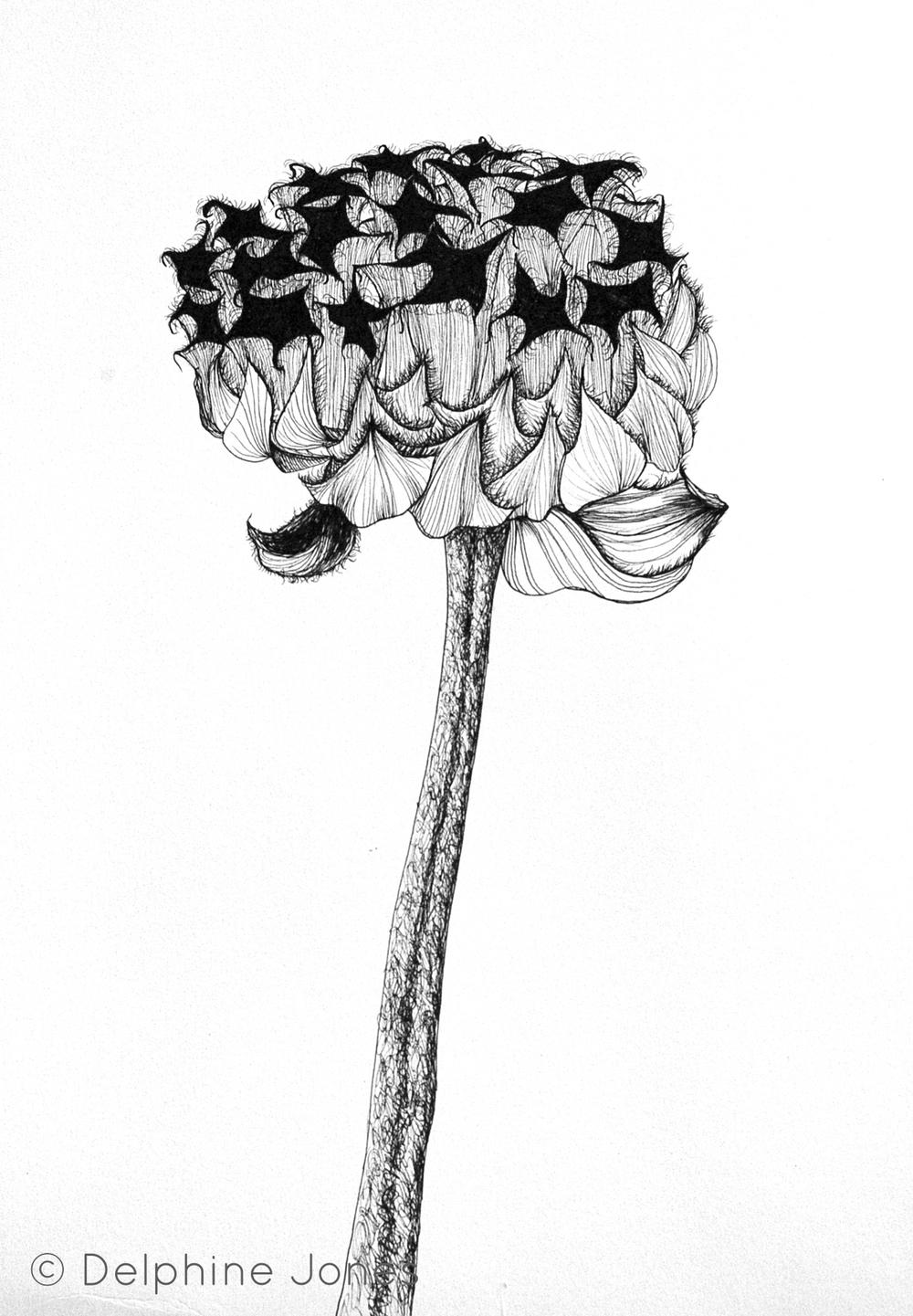 Seed head