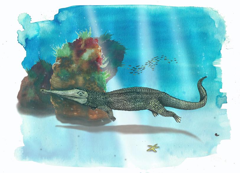 Fossil: Steneosaurus