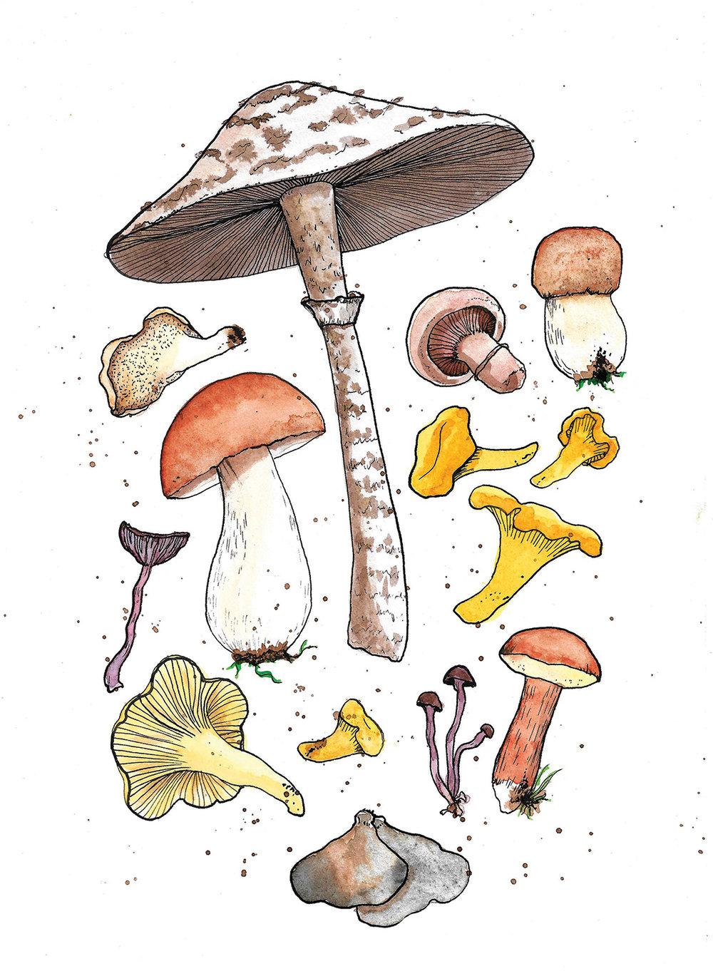 mushrooms web.jpg