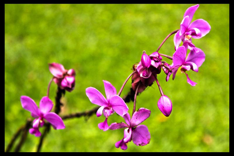 costaricaflowers.jpg