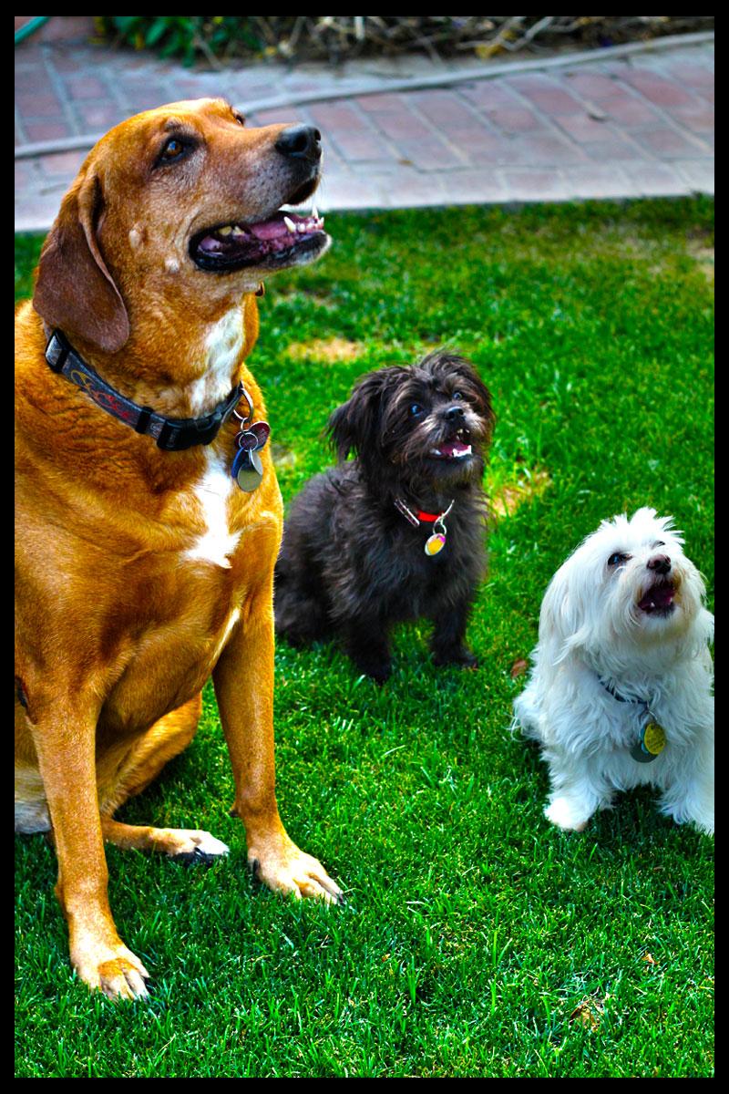 dog_trio.jpg