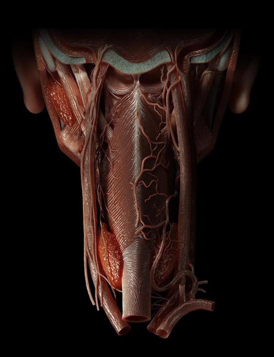 CG_TOKI_Anatomy_Noir-550x715.jpg
