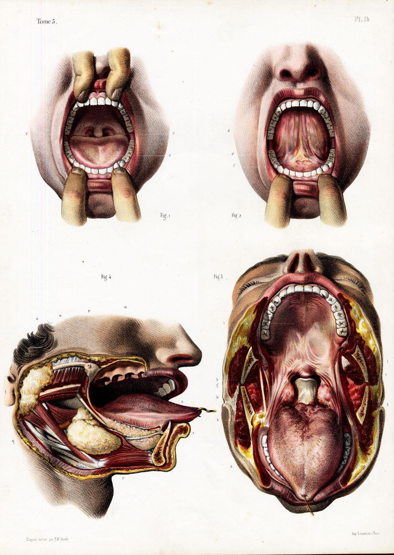 tongueDrawing.jpg