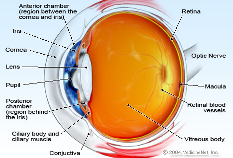 eye-anatomy.jpg