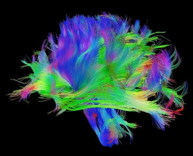 neural brain circuits.jpg