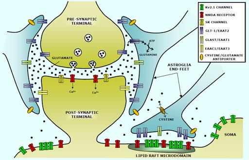 synapse-model.jpg