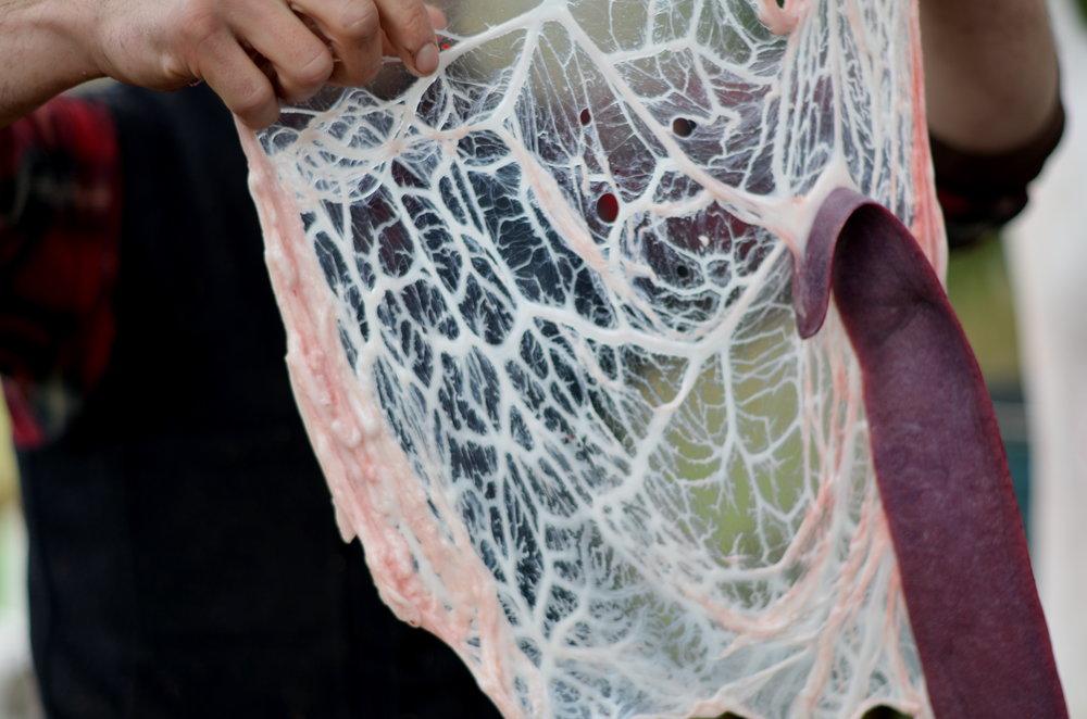 connctive tissue.jpg