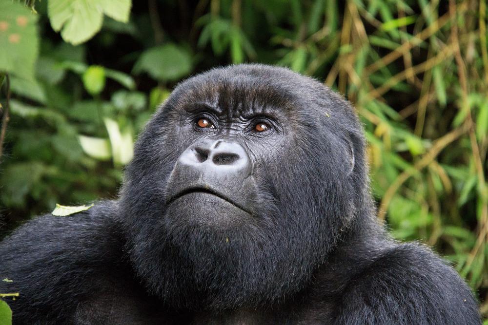 Pondering Evolution