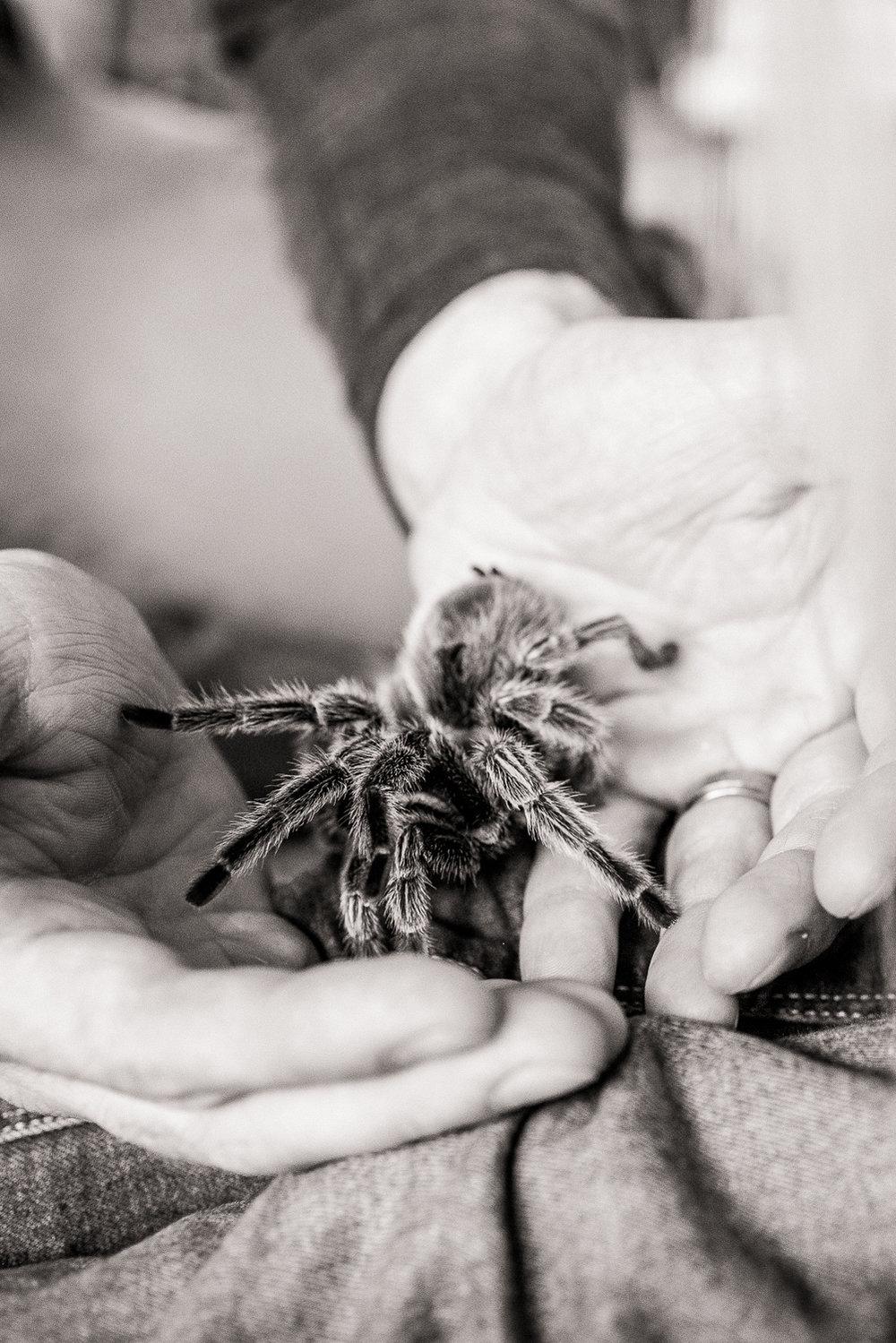 pet turantula