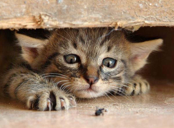Cat Minding