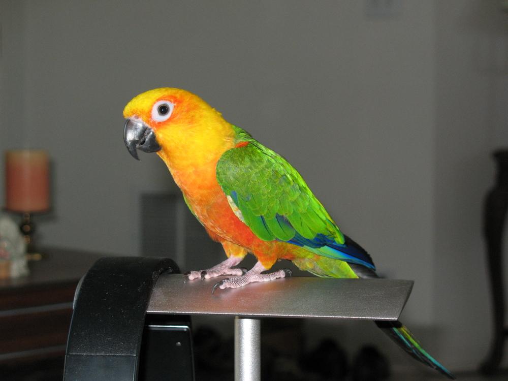 Bird Minding