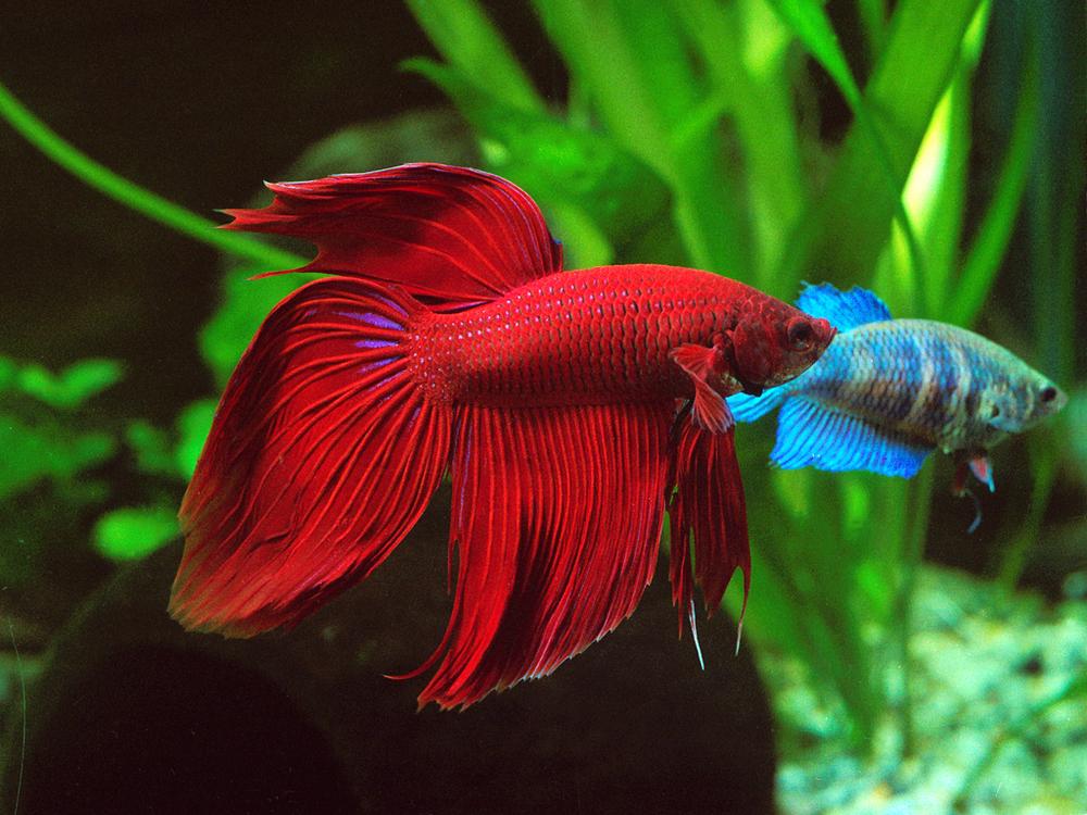 Fish Minding