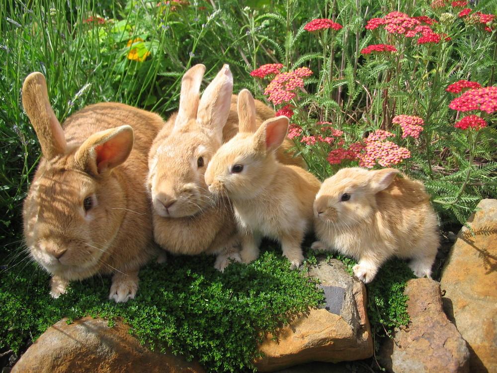 Rabbit Minding