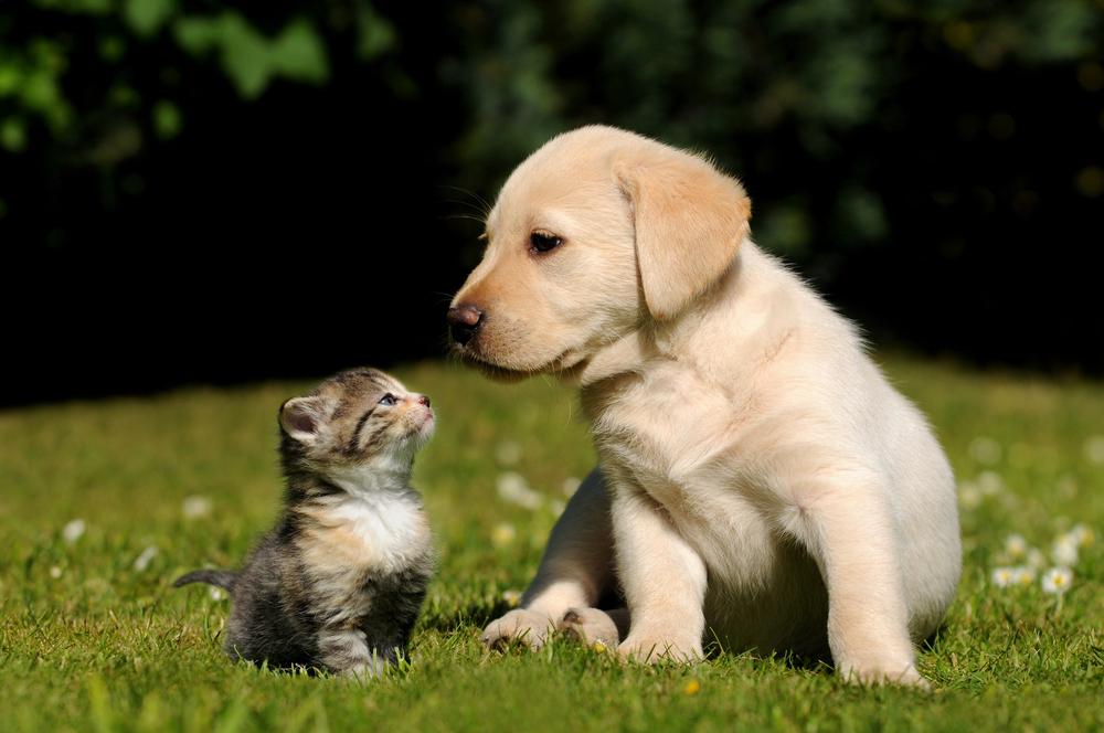 puppy-cat.jpg