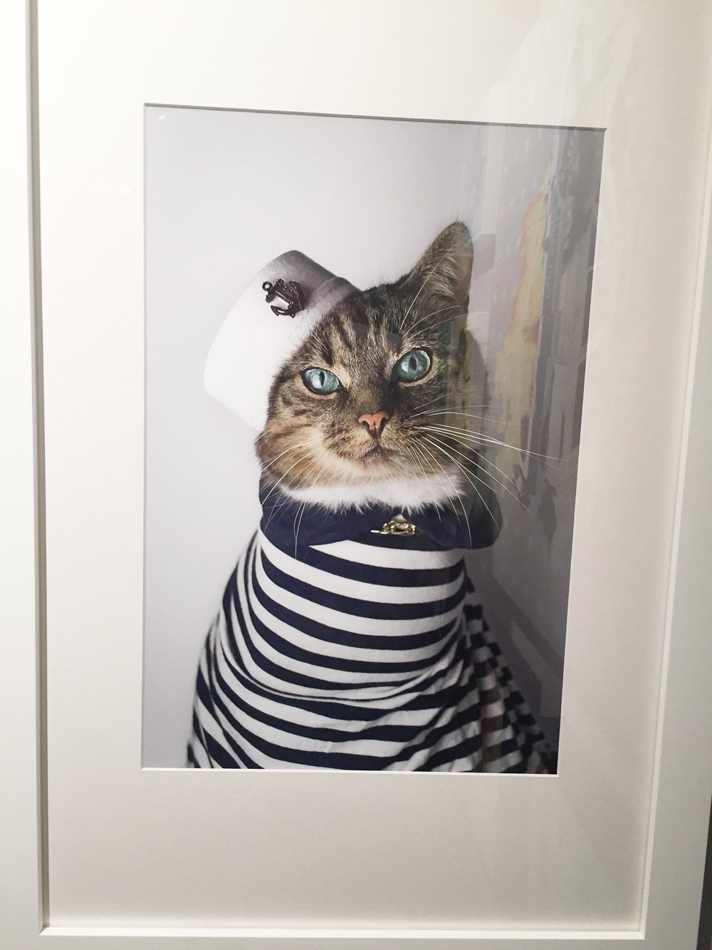 "Jason McGroarty ""Sailor Cat"""