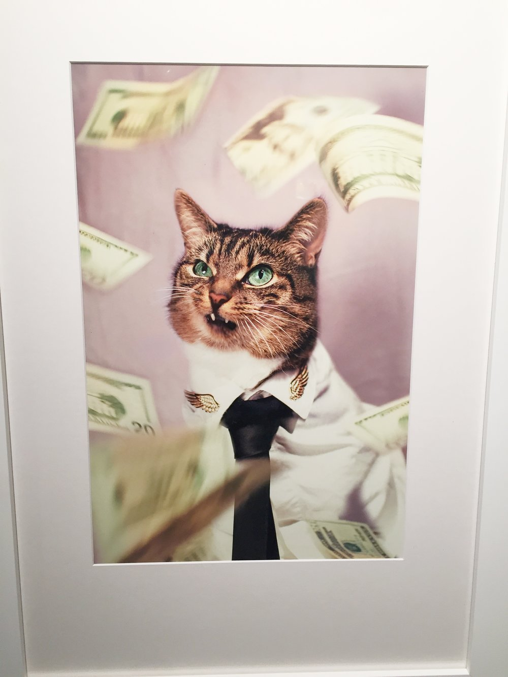 "Jason McGroarty ""Cat of Wall Street"""
