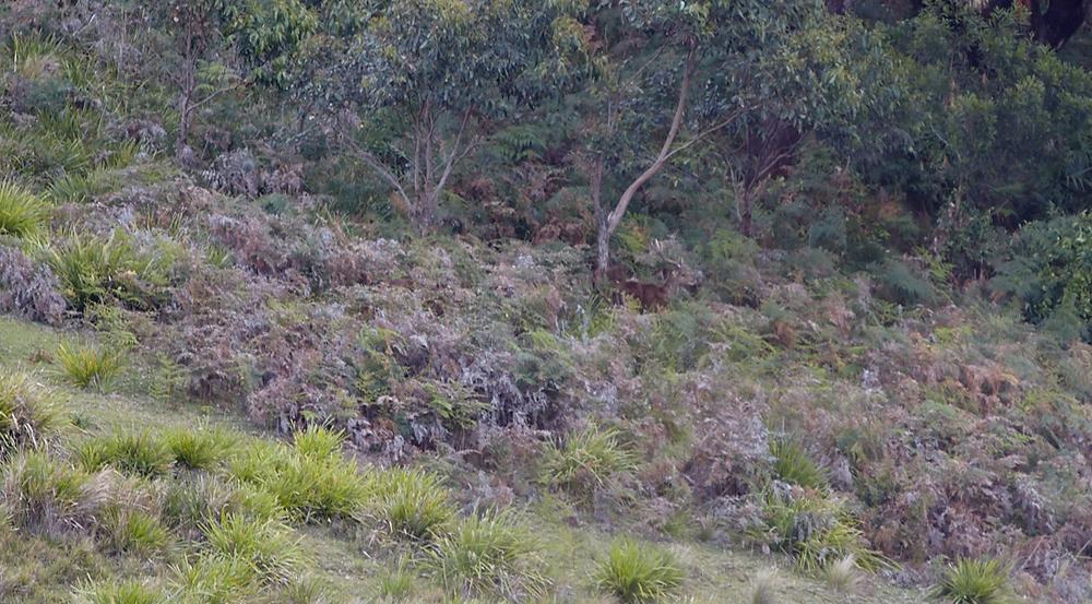 Perfect camouflage amongst the foliage