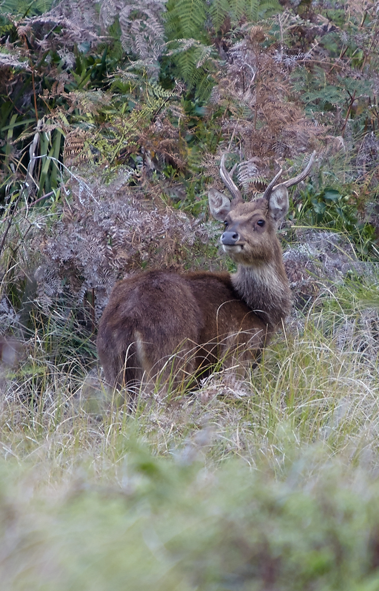 A younger buck that stayed around