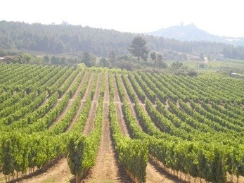 Balnea vineyard.jpg