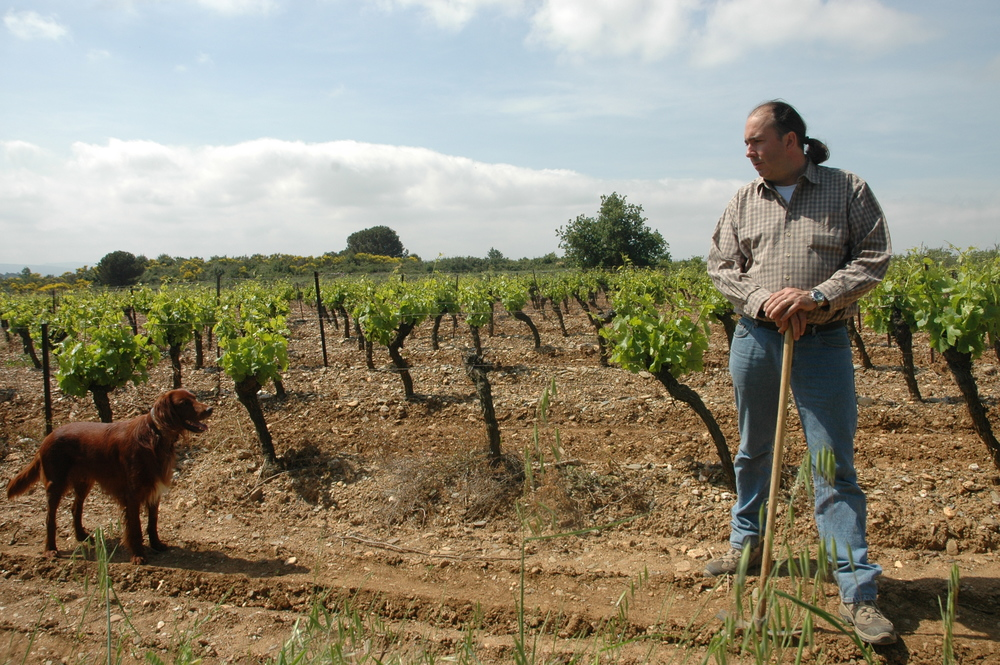 jean dog vineyard.JPG