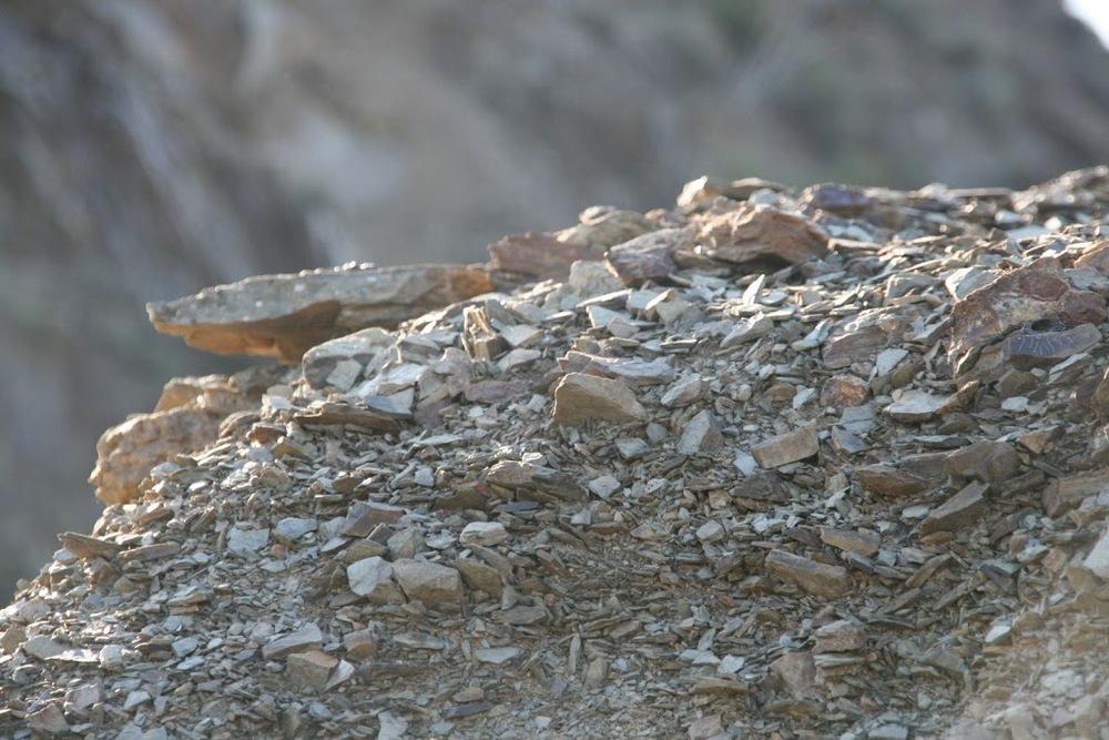 Priorat soil, llicorella